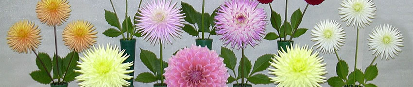 Western Districts Dahlias